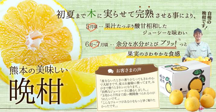 ウシジマ青果の晩柑の通販