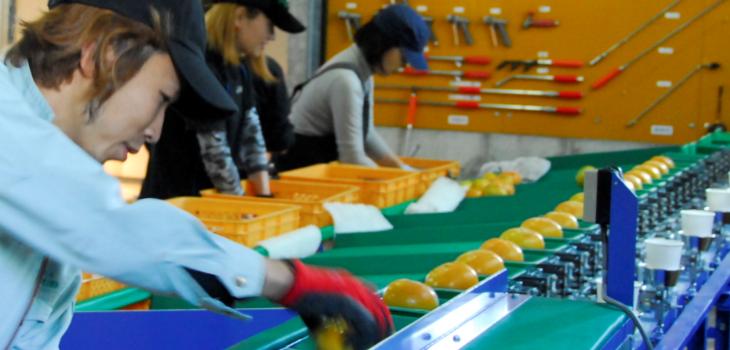 柿王の商品チェックの風景