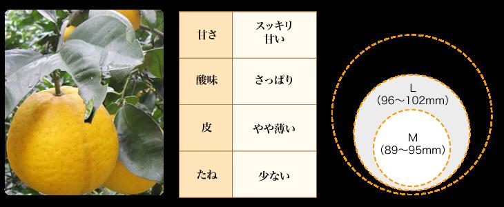 河内晩柑の説明